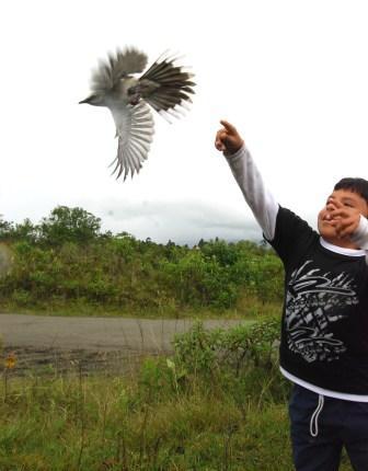Terminó el censo neotropical de aves en el Valle de Sibundoy