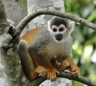 Exitosa reintroducción de fauna silvestre en el Centro Experimental Amazónico