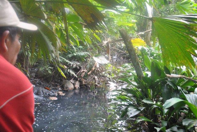 Pueblo Awá de Orito gana lucha ambiental con petroleras