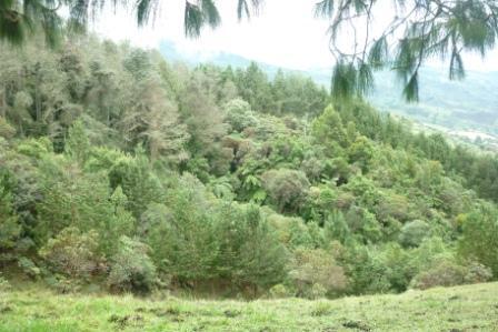 12 de octubre día del árbol una fecha para reflexionar en la importancia de los bosques