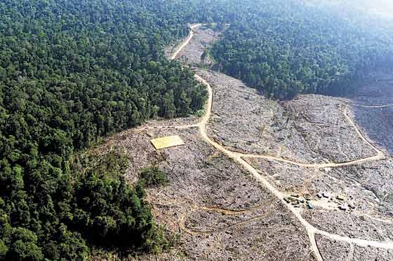 Deforestación de Amazonía colombiana alarma por riesgo climático
