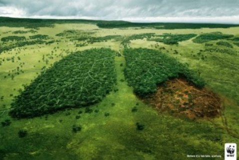 Amazonía tendrá cero deforestación con apoyo de guerrilleros durante posconflicto: MinAmbiente