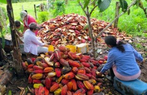 Desarrollo alternativo a la coca en Putumayo