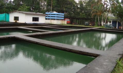 Ya se reestableció el servicio de agua en Puerto Asís