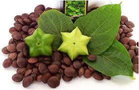 Sacha inchi, aceite indígena con valor medicinal