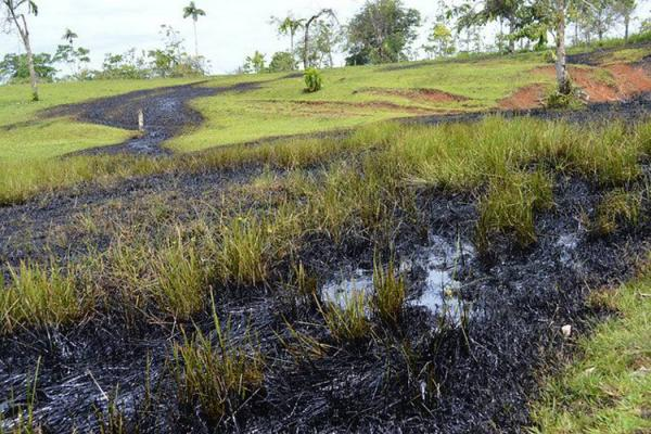 Farc causaron daño ambiental en Putumayo