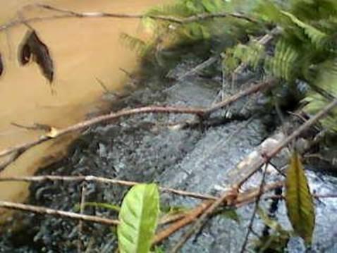 Campesinos de Puerto Guzmán, denuncian contaminación con crudo en el río Picudo
