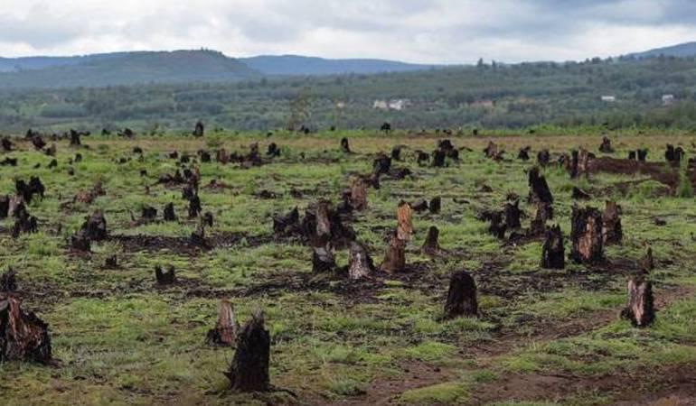 Reino Unido, Alemania y Noruega apoyarán programas para reducir la deforestación en la Amazonía colombiana