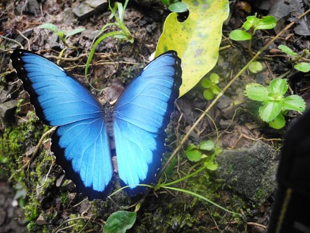 Mariposas, Primates, Aves y un Bosque Maravilloso, eso es Paway