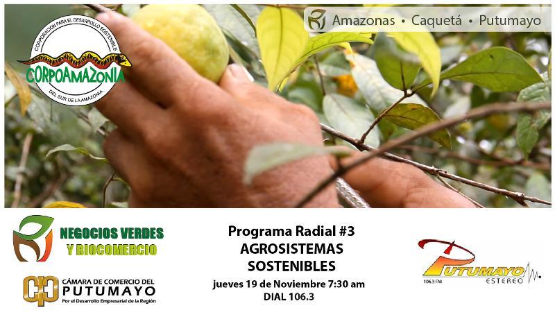 Negocios Verdes y Biocomercio – Jueves 19 de Noviembre