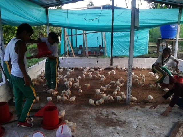 Unidades productivas se convierten en realidad en zona rural de San Miguel