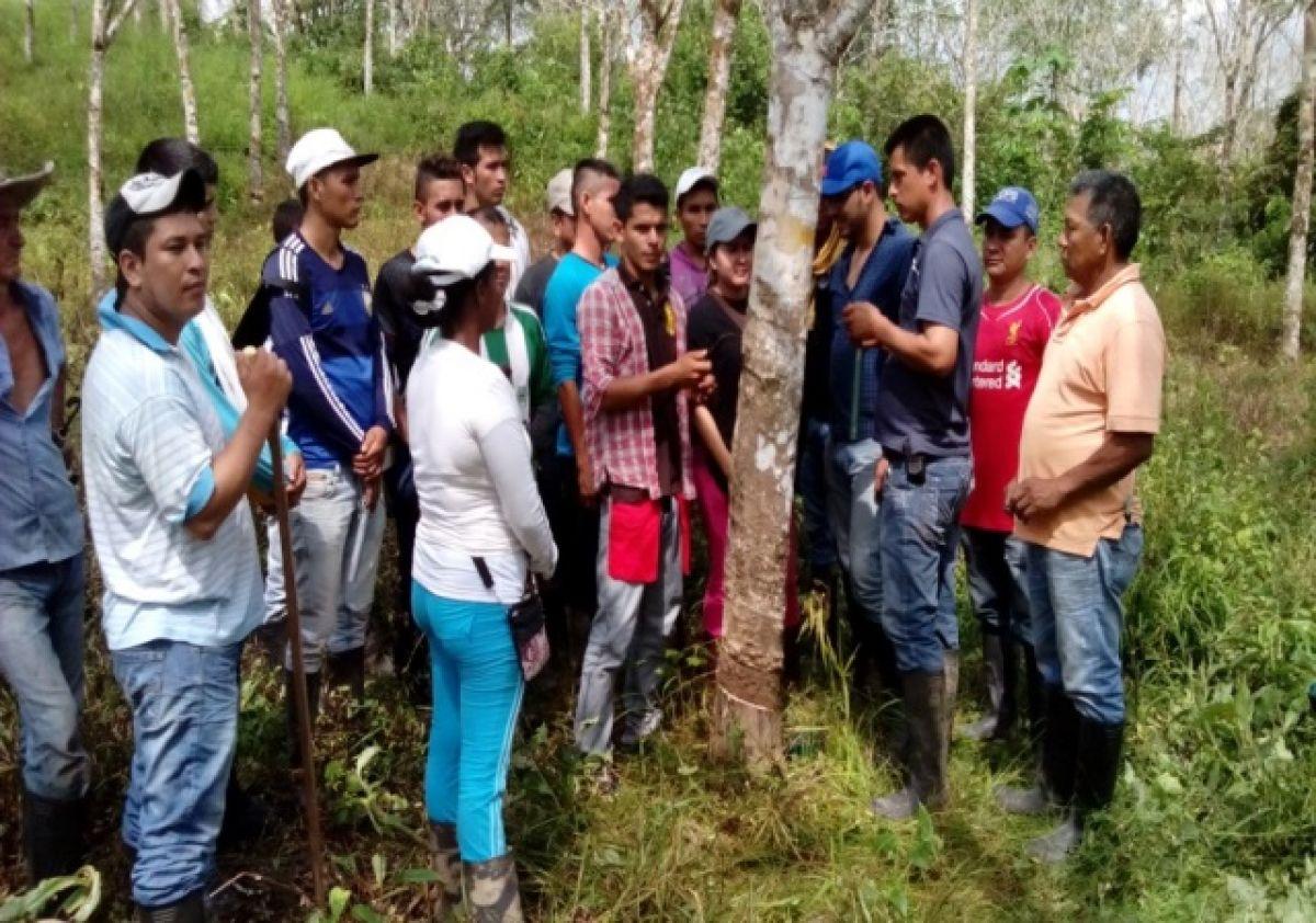 Caucho, opción de paz en Caquetá