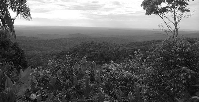 Lanzamiento del informe Petróleo, coca, despojo territorial  y organización social en Putumayo