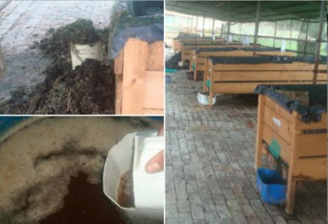 3 historias del buen uso del compost en lugar de fertilizantes