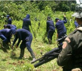 Organizaciones, autoridades locales y representantes de 55 mil familias cocaleras firmaron acuerdo para sustituir cultivos ilícitos