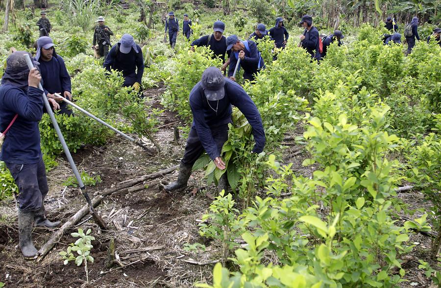 Lo que ocurre en el Putumayo repercute en Bogotá: Programa de Sustitución de cultivos