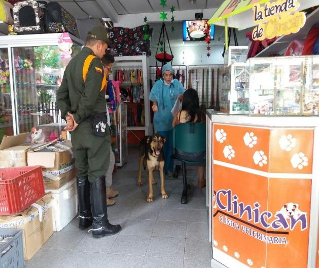 Jornada de esterilización en Mocoa en beneficio de las mascotas víctima de la avalancha