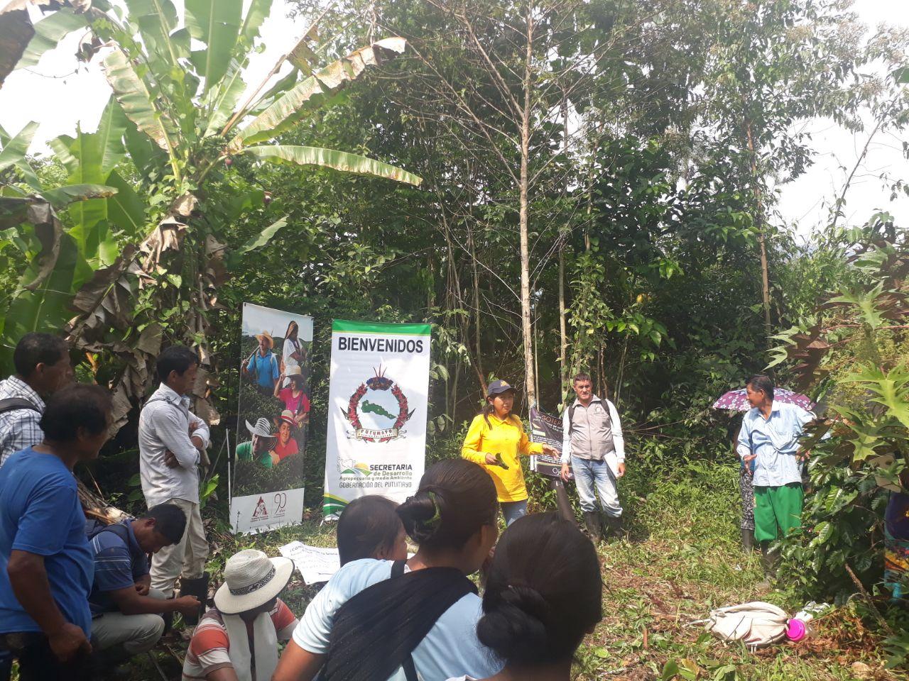 Gobernación hace seguimiento a convenio interadministrativo de café en Mocoa
