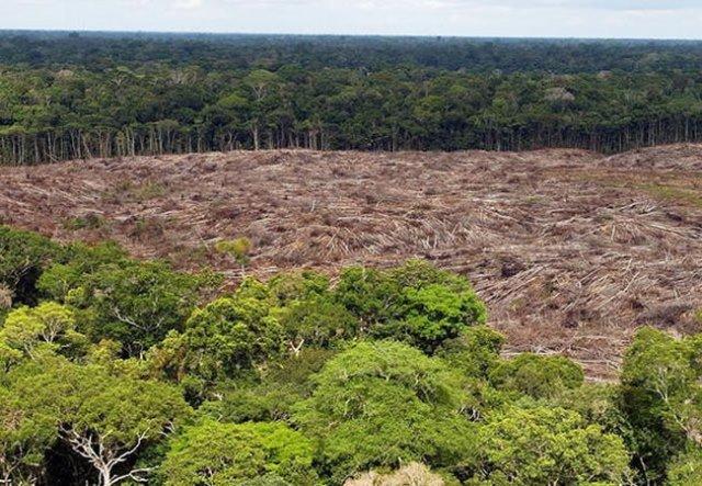 El Sena luchará contra la deforestación