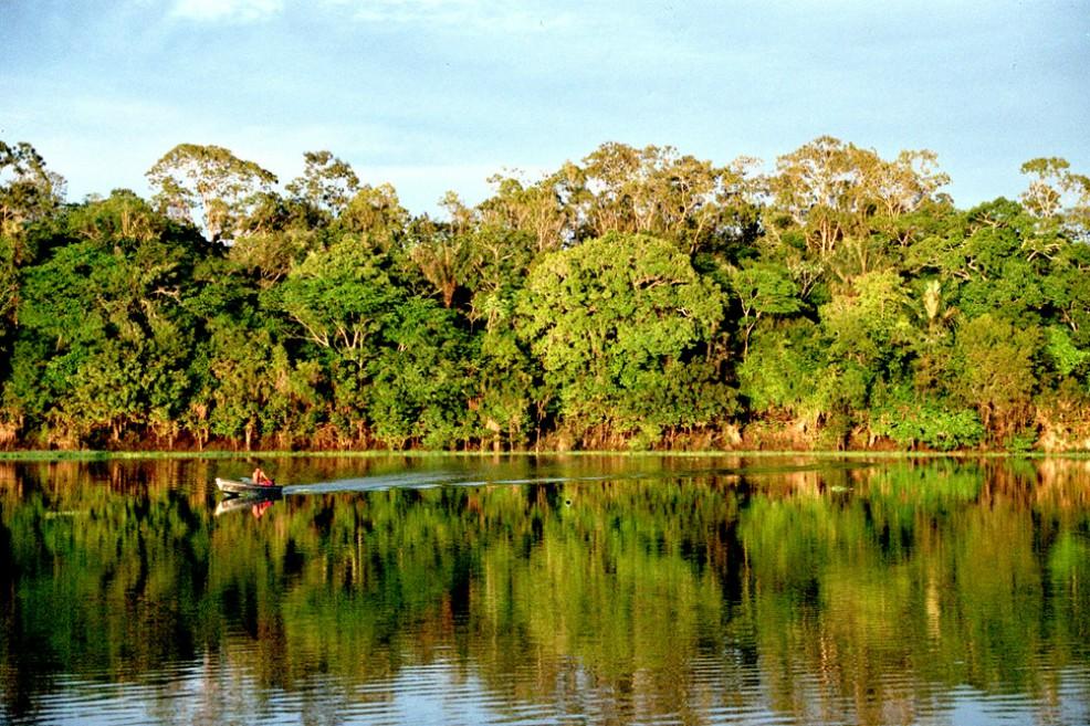 La Procuraduría pide frenar la deforestación en el Amazonas