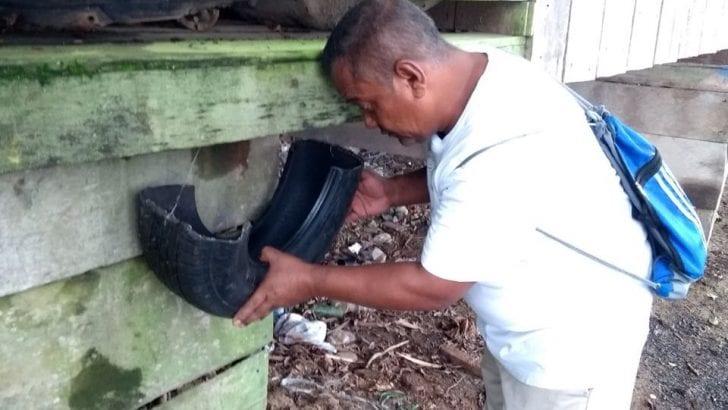 Siguen actividades de vigilancia entomológica en la región