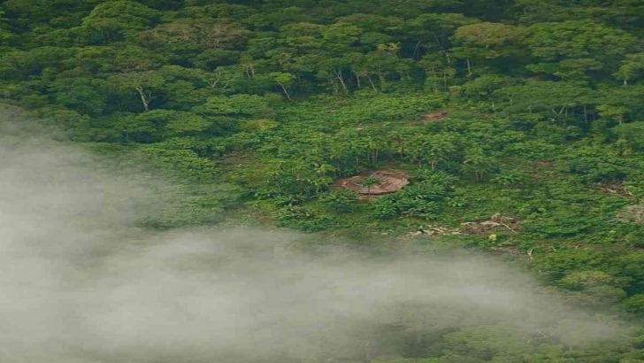 Oro, madera y religión: las amenazas para pueblos indígenas aislados en Colombia