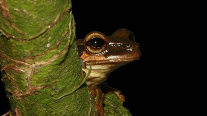Más de 4.300 especies amazónicas peligran por la deforestación