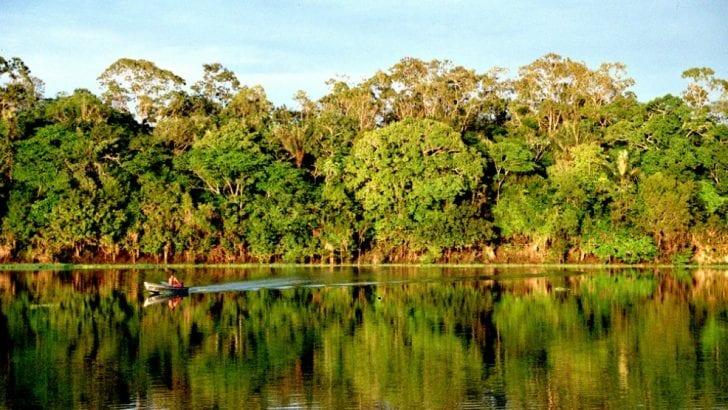 Procuraduría solicitó políticas públicas para frenar la deforestación en el país