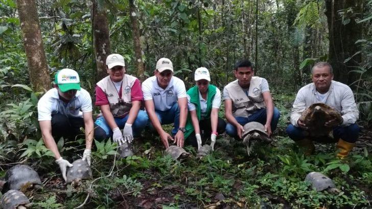 Del Huila al Putumayo: 50 ejemplares de fauna silvestre, fueron liberados