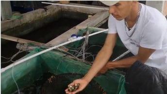 Peces Arawana, proyecto apoyado por Reconciliación Colombia