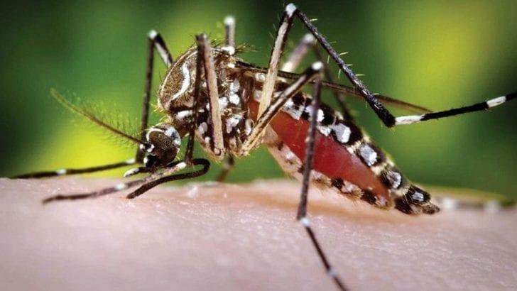 Se eleva a 22 el número de personas muertas por dengue en 2019