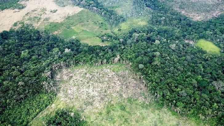 Próximo alcalde de Bogotá: detenga la deforestación en la Amazonia!!
