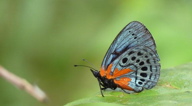 Putumayo, un paraíso de Mariposas