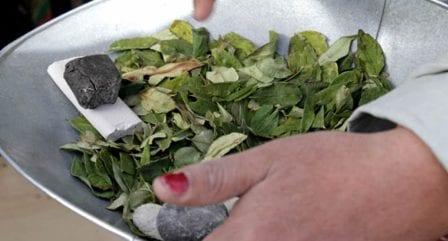 Naciones Unidas, preocupada por aumento de cultivos de coca en Colombia