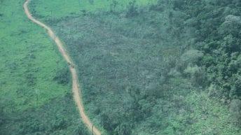 Donde más se deforesta en Colombia habría, en promedio, 46 mil especies desconocidas