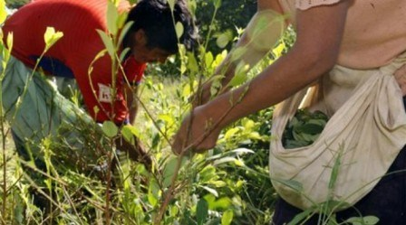 Avanza dialogo entre Gobierno Nacional y Voceros de las familias que arrancaron la coca en el Putumayo