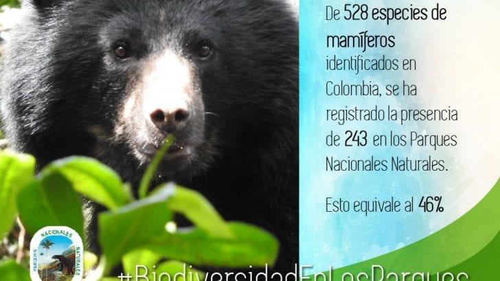19.228 especies de fauna y flora se protegen en los Parques Nacionales Naturales de Colombia