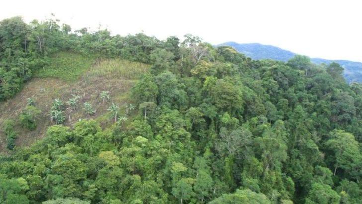 Noruega entrega a Colombia 17 millones de dólares para frenar deforestación