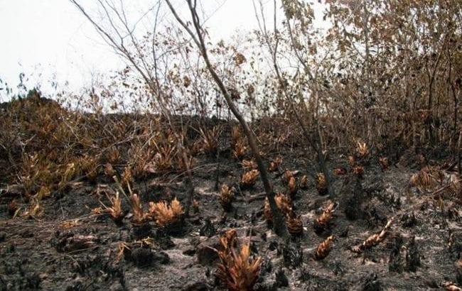 Indígenas de la Amazonía advierten aumento de la deforestación tras acuerdo de paz