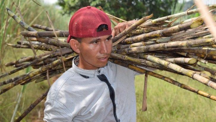 Más de 2 mil millones de pesos se fugan de Putumayo sólo por la panela: Estudio visibiliza oportunidades de mercado del departamento