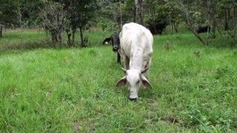 Alianza Estratégica por el emprendimiento e innovación Agraria en el Putumayo