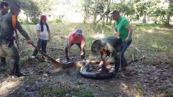 La Policía Nacional logra la recuperación de una serpiente anaconda de 8 metros