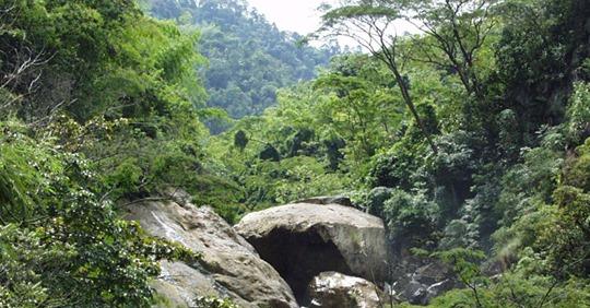 La meta restaurar mil hectáreas de bosques en Putumayo y Cauca