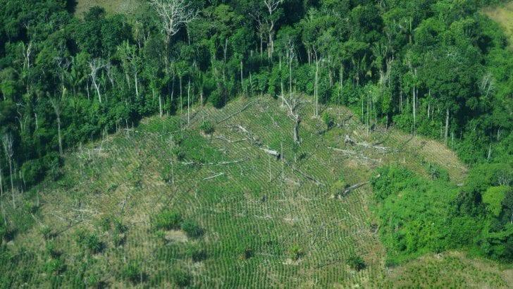 Al banquillo 94 entidades colombianas por deforestación en Amazonia