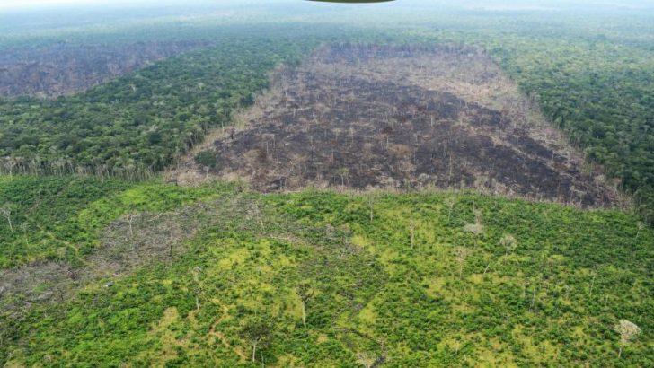 Harán sembratón de árboles para recuperar la Amazonia