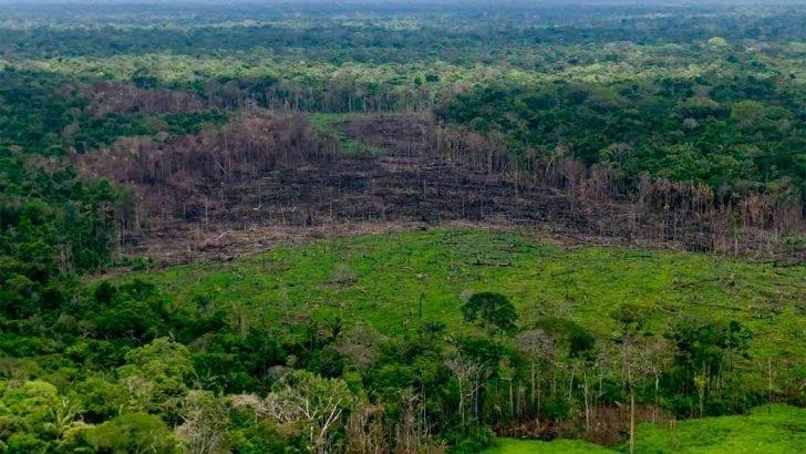 «Hace falta mayor articulación institucional para proteger la Amazonia»: Corpoamazonia