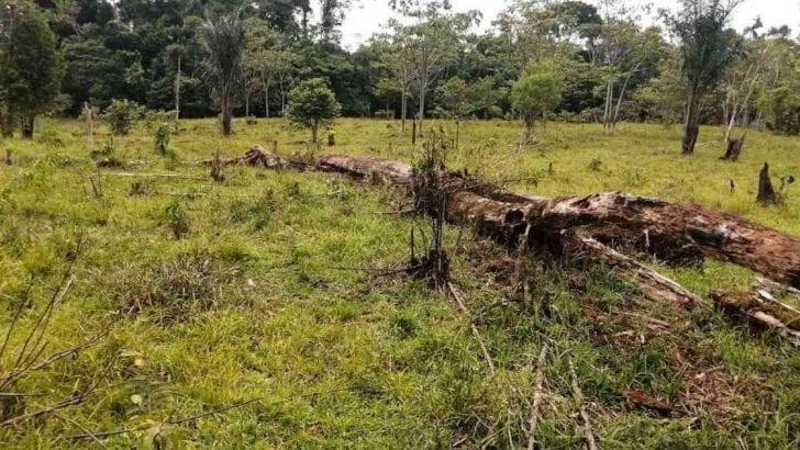 Más de 1.500 hectáreas del Parque Nacional La Paya iban a destinarse para el cultivo de coca