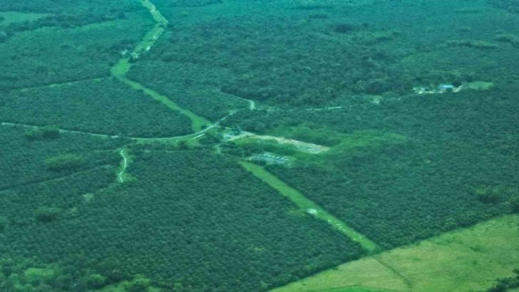 Zonas con cultivos y ganado en la Amazonia colombiana crecieron 45 por ciento