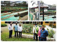 Vivero productor y comercializador de material de propagación de cacao obtuvo el registro ICA